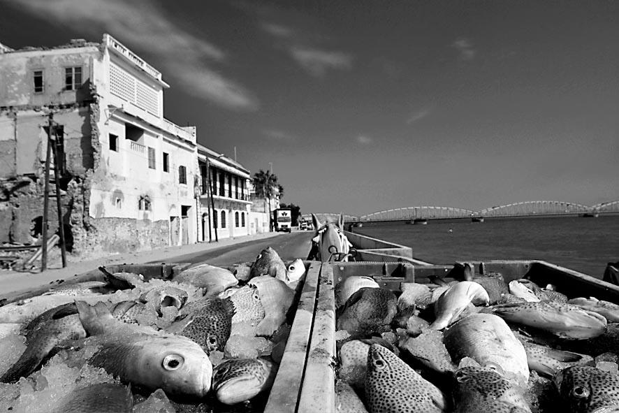 le vie del pesce-13