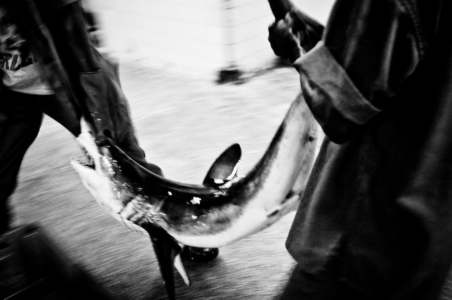 le vie del pesce-20
