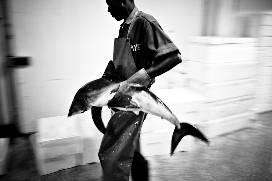 le vie del pesce-21