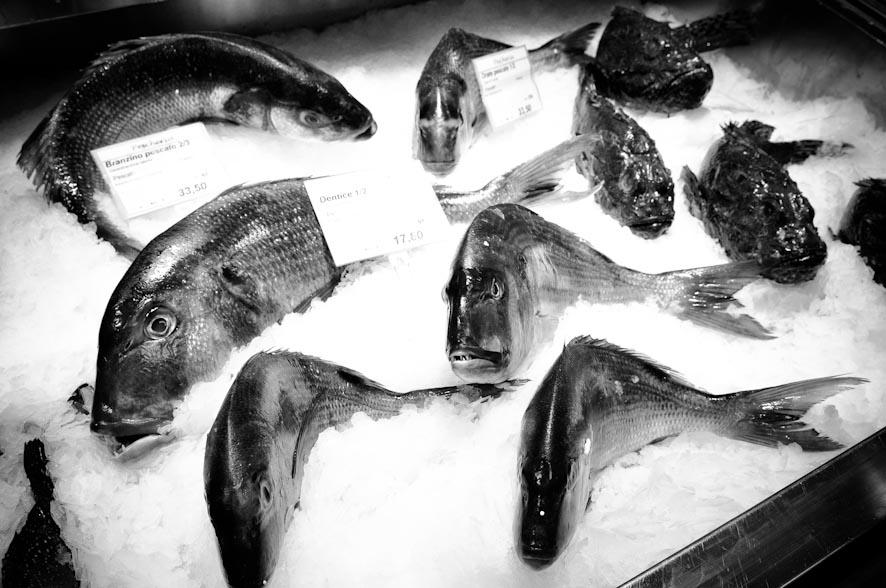 le vie del pesce-28