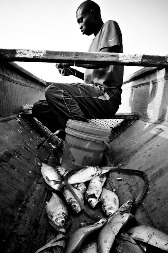 le vie del pesce-3