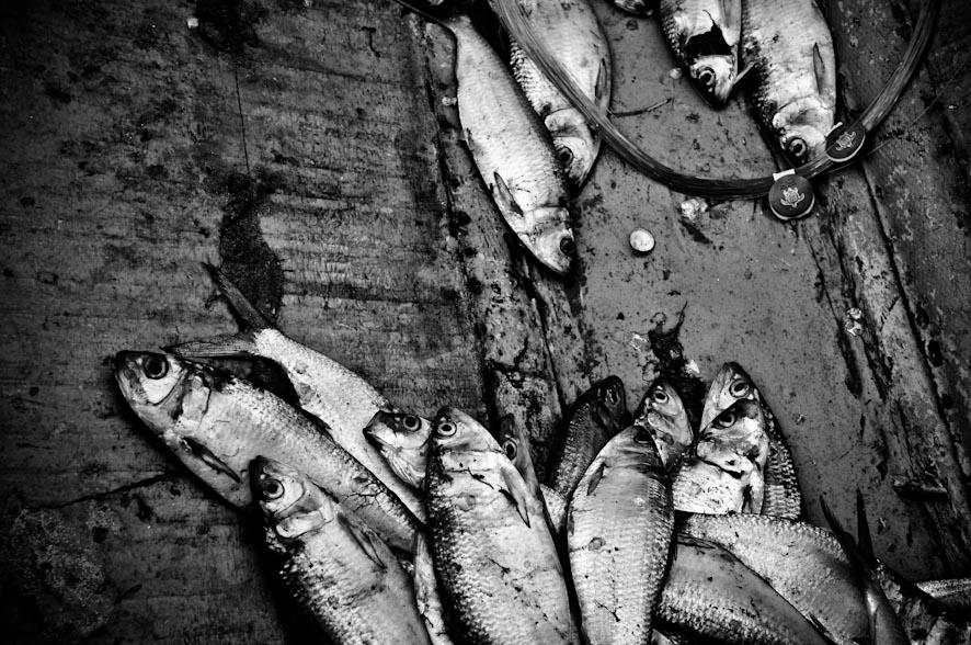 le vie del pesce-7